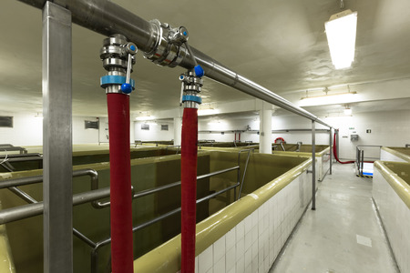 fermentation: fermentation pools in an old brewery plant