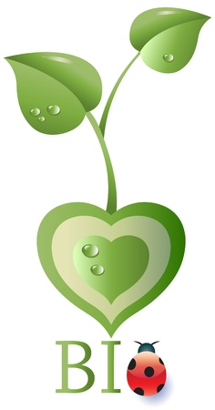 Leaves sprouting from a green heart, bio text with ladybug