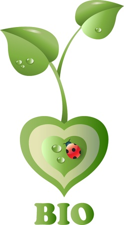 A plant in the shape of heart  With ladybug  Symbol of wealth Second version