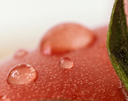 Sommige waterdruppeltjes op een rode tomaat Stockfoto