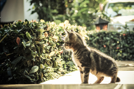 Cat walking in the garden photo
