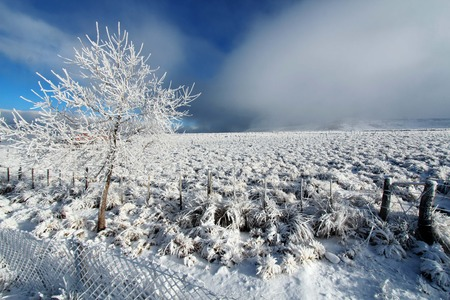 beautiful winter landscape  photo