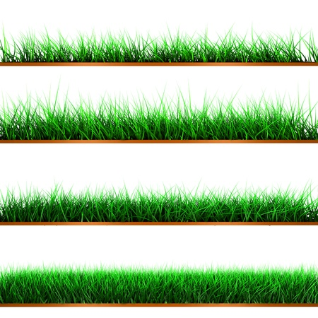 Green color grass illustration isolated on white illustration