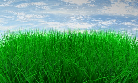 fringe: Green color grass illustration on blue sky