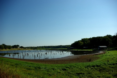 August, 2011,. A portion of Lake Palstine is drying up exposing tree stumps in the lake. Imagens - 10692792