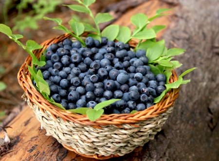 fresh blueberries placed in a basket, natural concept