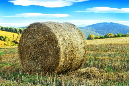 roll of hay on the countryside, bales, rural scene photo