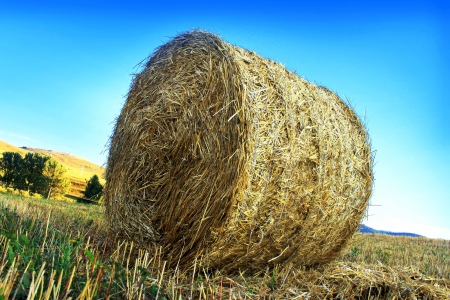 bail: roll of hay on the countryside, bales, rural scene