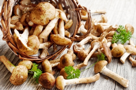 fresh Armillaria mellea mushrooms placed on wooden board and basket photo