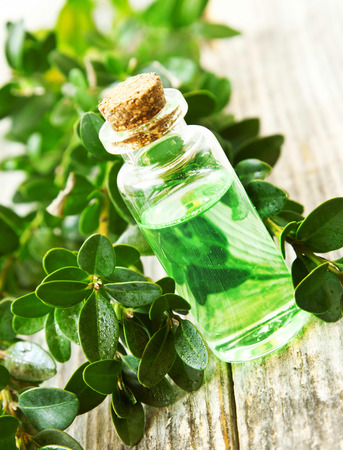 extract: Herbal Essential Oil Bottle for Aromatherapy.Green Essence Extract