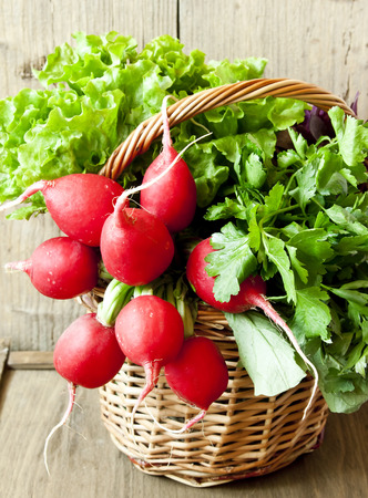 Fresh Greens and Radish in a Basket, Healthy Green Lettuce and Parsley with Radish in a Wicker Basket photo