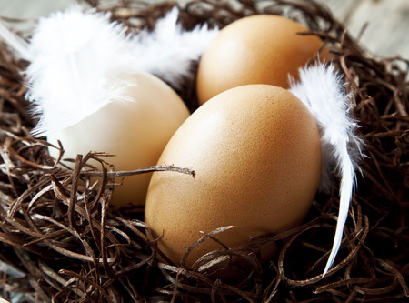 Easter Eggs with White Feathers in a Nest photo
