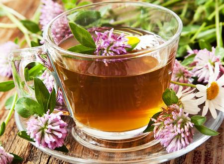 Tè di erbe con Trifolium pratense e Chamomilla chamomilla, trifoglio rosso e Fiori di Camomilla in tazza trasparente