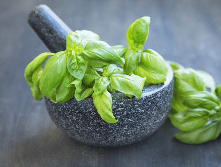 Basil Aromatic Herb in a Mortar with Pistil Making Pesto Sauce
