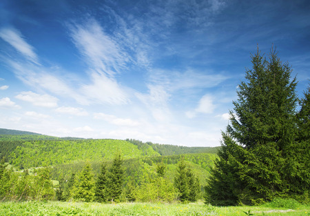 natura: Natura Landscape with Fir Tree Forest,Green Vegetation, Meadows and Bright Blue Sky, Beautiful Rural Scene