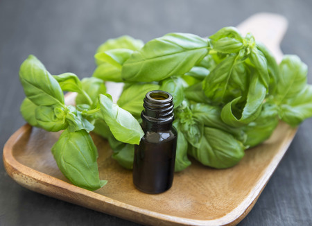 Basil Essential Oil in a Bottle with Basil Fresh Herb Leaves