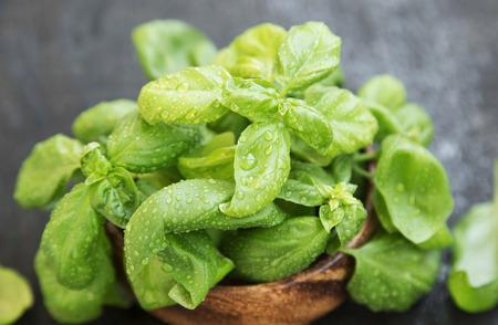 aromatický: Basil Herb čerstvé a aromatické, čerstvě vybral Raw Basil Bunch