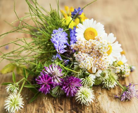 medicina natural: Hierbas curativas para la Medicina Natural Alternativa y Terapia Foto de archivo