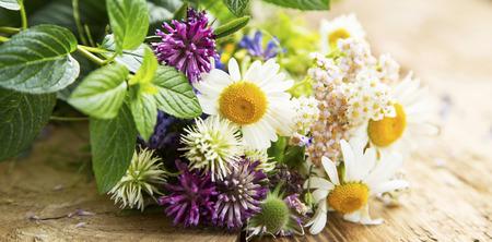 Geneeskrachtige kruiden voor alternatieve Natuurlijke Geneeskunde en Therapie Stockfoto