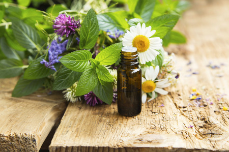 healing plant: Essential Oil with Natural Herbs , Alternative Medicine Stock Photo