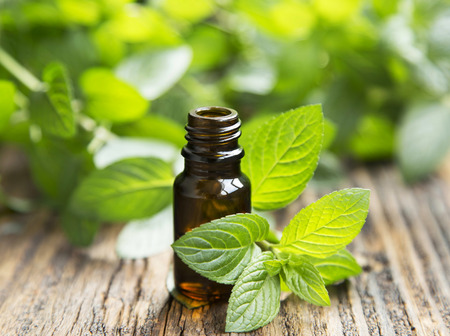 massage huile: Natural Mint Huile Essentielle dans une bouteille en verre avec Feuilles de menthe fraîche Banque d'images