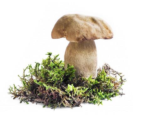 boletus mushroom: Boletus Mushroom with Moss Isolated on White