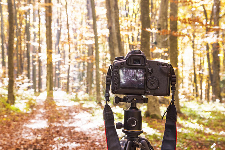 photo: Professional Camera on a Tripod Taking Nature and Forest Photography Stock Photo
