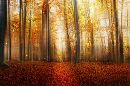 fantasy background: Magic Road in the Autumn Forest with Mysterious Lights and Beautiful Trees
