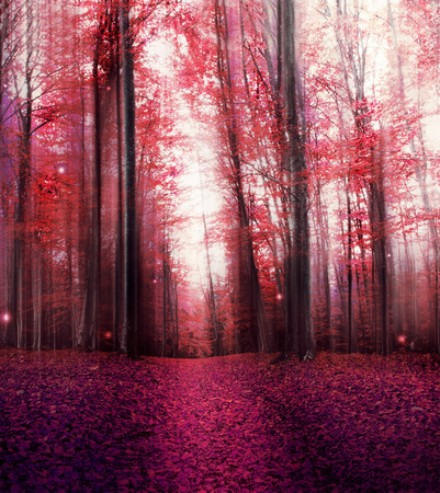 Red Magical Forest with Mist and Mysterious Lights