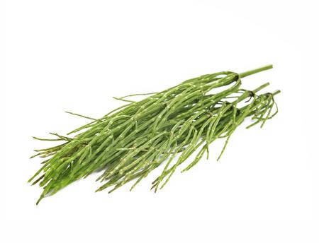 equisetum: Common horsetail medicinal herb (Equisetum arvense) isolated on white Stock Photo