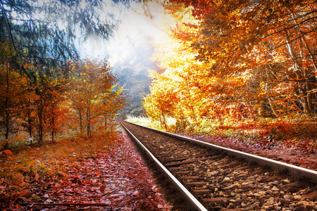endlos: Railway in the autumn magic forest with trees and sunlight