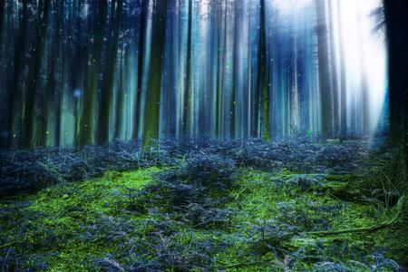 Blue Magic sprookjesbos met mysteus lichten