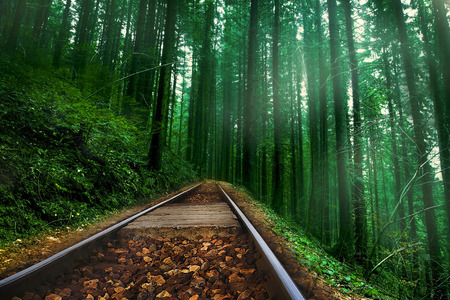 forest railway: Railway in the foggy, mysterious and magic forest