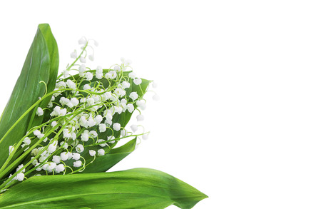 mayflower: Lily of the valley bouquet on white background Stock Photo