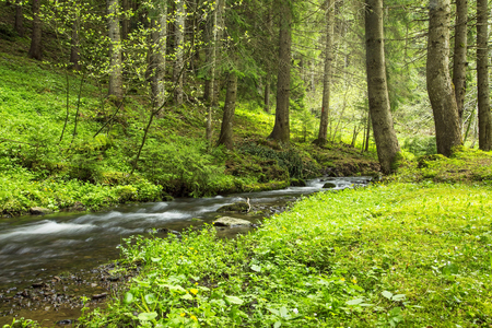 árboles de los bosques verdes y la vegetación con arroyo de montaña que fluye