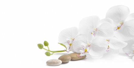 Spa white orchid with massage stones on white background Stockfoto