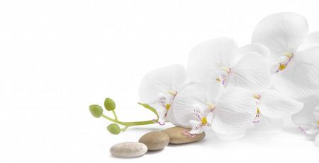 Spa witte orchidee met massage stenen op een witte achtergrond Stockfoto