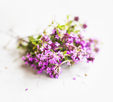 Wild thyme herb, thyme flowers bouquet