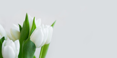 White tulips bouquet on concrete background copy space, spring holidays greeting card copy space with spring tulips flowers, beautiful mother's day card Standard-Bild - 118387806