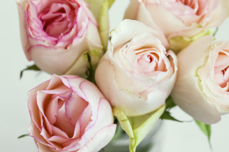 Pink roses bouquet, soft delicate roses closeup, spring roses bouquet in a vase Standard-Bild - 118387889