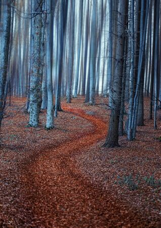 Magic fairy forest road, mysterious beech forest road