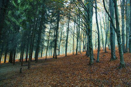 Dark forest landscape, autumn forest landscape