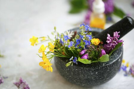 Herbal medicine. Mortar and pestle with medicinal plants and herbs, alternative medicine with plants, oils and flowers Фото со стока