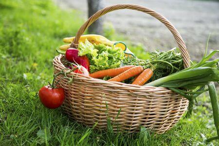 Cesta de verduras orgánicas frescas, comida local, recién cosechadas del jardín