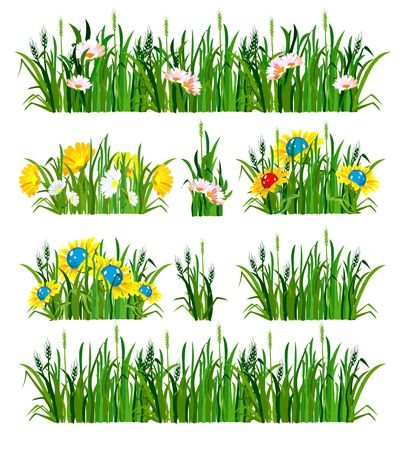 daisyflower: vector illustration of the composition of the grass and flowers isolated on white background Illustration