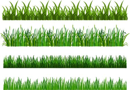 daisyflower: vector illustration of the composition of the grass isolated on white background