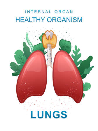 internal organs medical poster concept