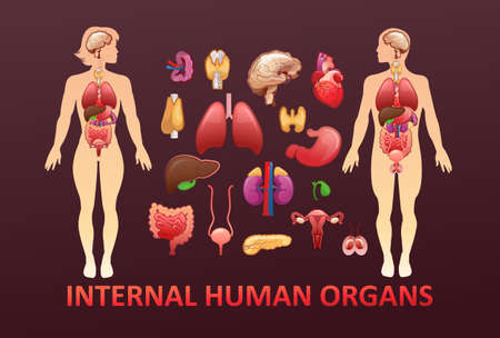 organs in the human body banner