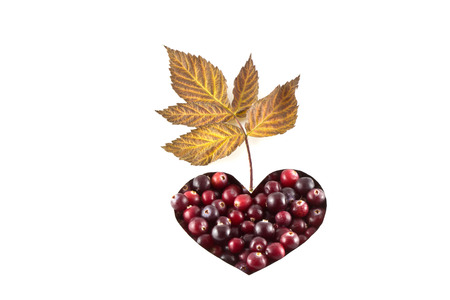 Cranberries in heart shape over white background photo