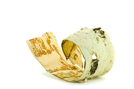 birch bark isolated on a white background Imagens